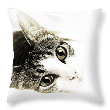 Grand Kitty Cuteness 3 High Key Throw Pillow by Andee Design
