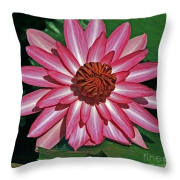 Grand Opening Throw Pillow by Larry Nieland
