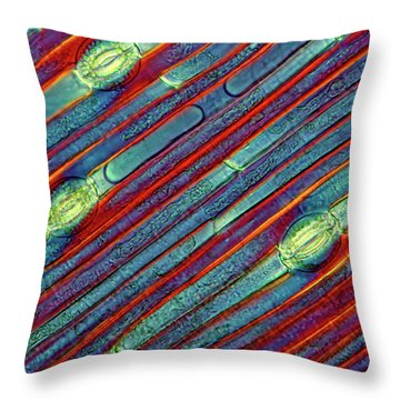 Plant Anatomy Throw Pillows