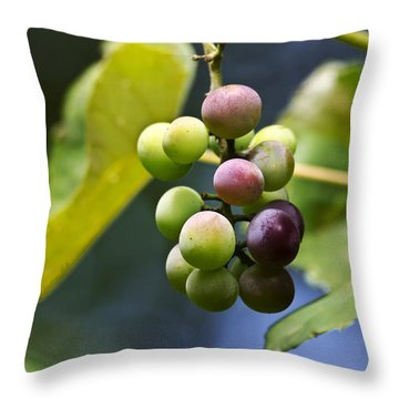 Grapes On The Vine Throw Pillow by Christina Rollo