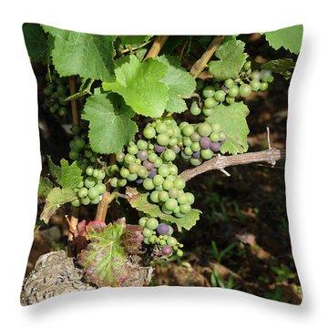 Grapevine. Burgundy. France. Europe Throw Pillow by Bernard Jaubert