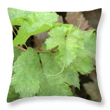 Throw Pillow featuring the photograph Grapevine by Laurel Powell