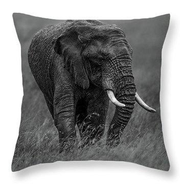 Majestic Throw Pillows