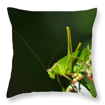 Grasshopper #1 Throw Pillow