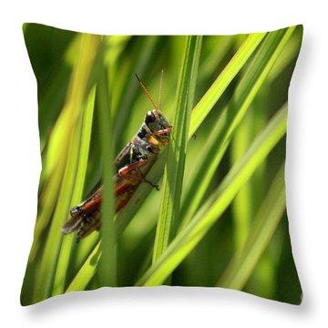 Grasshopper In Grass Throw Pillow