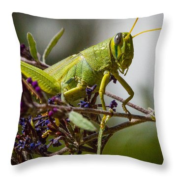 Throw Pillow featuring the photograph Grasshopper by Janis Knight