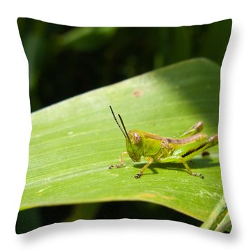 Grasshopper On Corn Leaf   Throw Pillow