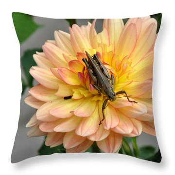 Grasshopper On Dahlia Throw Pillow by Diane Lent