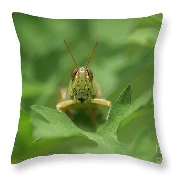 Throw Pillow featuring the photograph Grasshopper Portrait by Olga Hamilton
