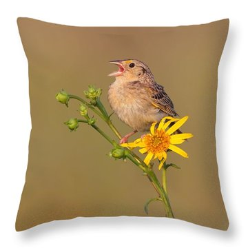 Grasshopper Sparrow Singing Throw Pillow by Daniel Behm