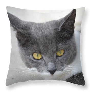 Gray Cat - Listening Throw Pillow