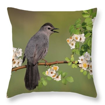 Gray Catbird Calling Throw Pillow by Daniel Behm