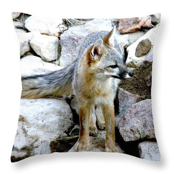 Gray Fox At The Oasis Throw Pillow by Feva  Fotos