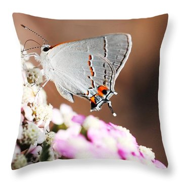 Gray Hairstreak Butterfly Throw Pillow by Lorri Crossno