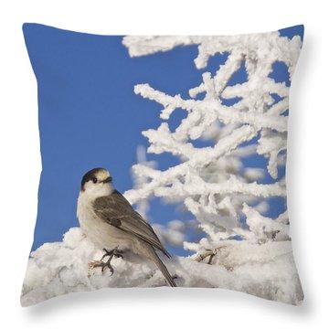 Gray Jay 4 Throw Pillow