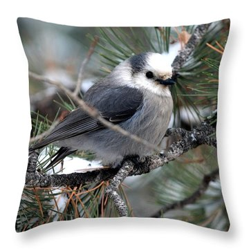 Gray Jay On A Snowy Pine Throw Pillow