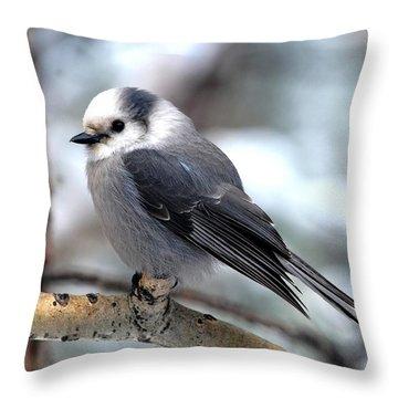 Gray Jay On Aspen Throw Pillow