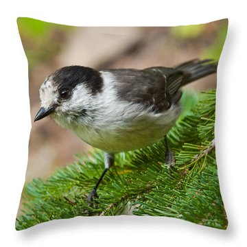 Gray Jay On Fir Tree Throw Pillow by Jeff Goulden