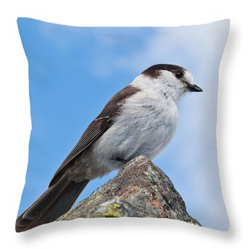 Gray Jay With Blue Sky Background Throw Pillow