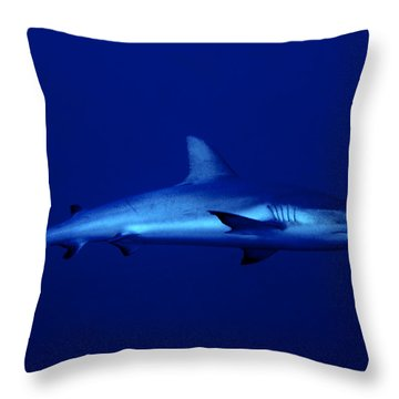 Gray Reef Shark Throw Pillow