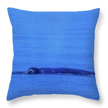 Gray Whalle In Puget Sound  Throw Pillow by Jeff Swan