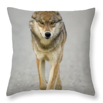 Gray Wolf Denali National Park Alaska Throw Pillow