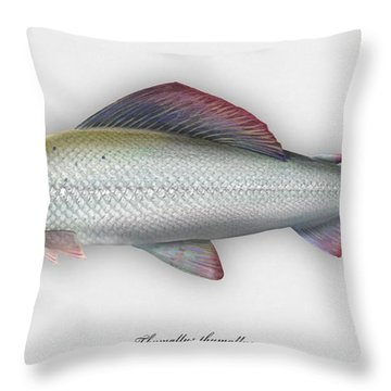 Grayling - Thymallus Thymallus - Ombre Commun - Harjus - Flyfishing - Trout Waters - Trout Creek Throw Pillow