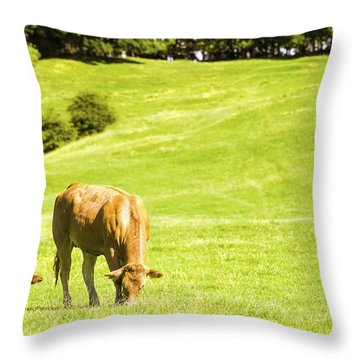 Grazing Cows Throw Pillow by Amanda Elwell