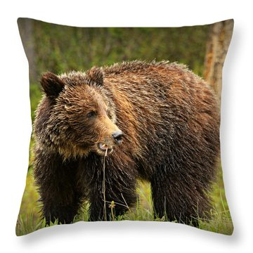Grazing Grizzly Throw Pillow by Stephen Stookey