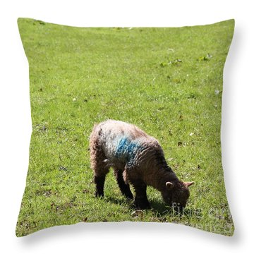 Grazing Throw Pillow by Vicki Spindler