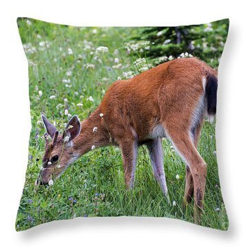 Grazing Young Buck Throw Pillow by Mike Dawson