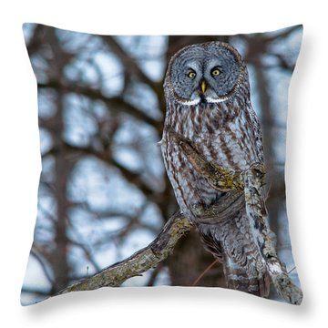 Great Beauty Throw Pillow by Cheryl Baxter