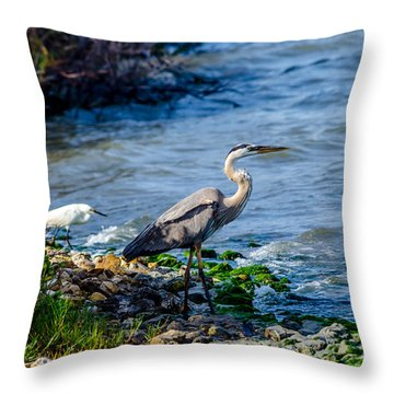 Great Blue Heron And Snowy Egret At Dinner Time Throw Pillow