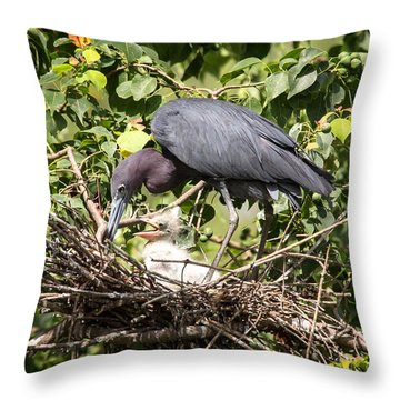 Great Blue Heron Chicks In Nest Throw Pillow