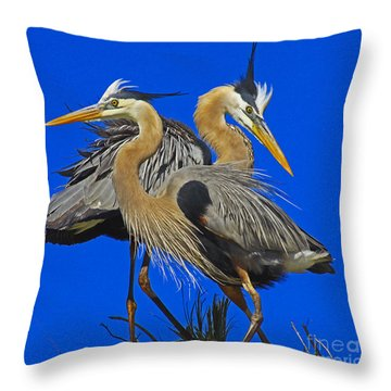 Great Blue Heron Family Throw Pillow by Larry Nieland