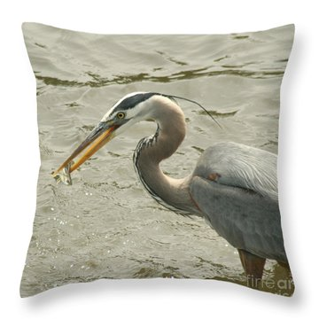 Throw Pillow featuring the photograph Great Blue Heron Fishing by Bob and Jan Shriner