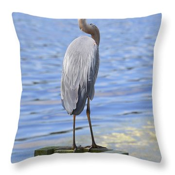 Great Blue Heron Throw Pillow by Judith Morris