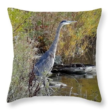 Great Blue Heron - Juvenile Throw Pillow