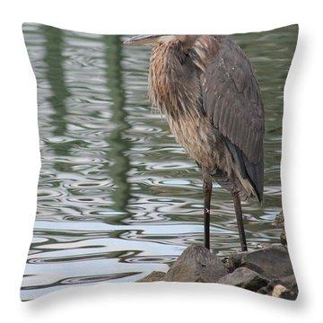 Great Blue Heron On Watch Throw Pillow by Robert Banach