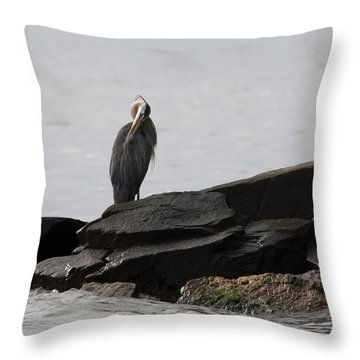 Throw Pillow featuring the photograph Great Blue Heron Preening by Rebecca Sherman