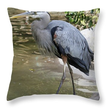 Great Blue Heron Throw Pillow by Shoal Hollingsworth