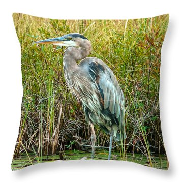 Great Blue Heron Waiting For Supper Throw Pillow by Eti Reid