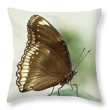 Great Eggfly Butterfly Throw Pillow by Judy Whitton