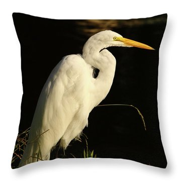 Great Egret At Morning Throw Pillow by Robert Frederick