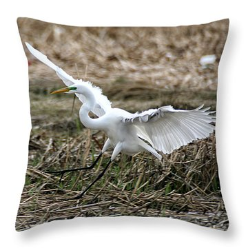 Throw Pillow featuring the photograph Great Egret Landing by William Selander