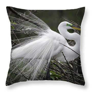 Great Egret Preening Throw Pillow by Fran Gallogly