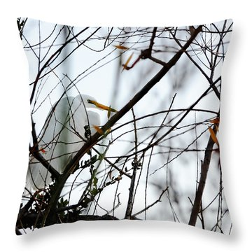 Throw Pillow featuring the photograph Great Egret Roosting In Winter by Susan Wiedmann