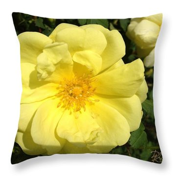 Throw Pillow featuring the photograph Great-grandma's Heirloom Rose by Doug Kreuger
