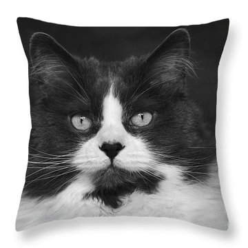 Great Gray Cat Throw Pillow