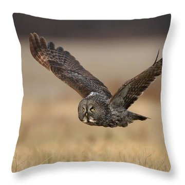 Great Gray Throw Pillow by Daniel Behm